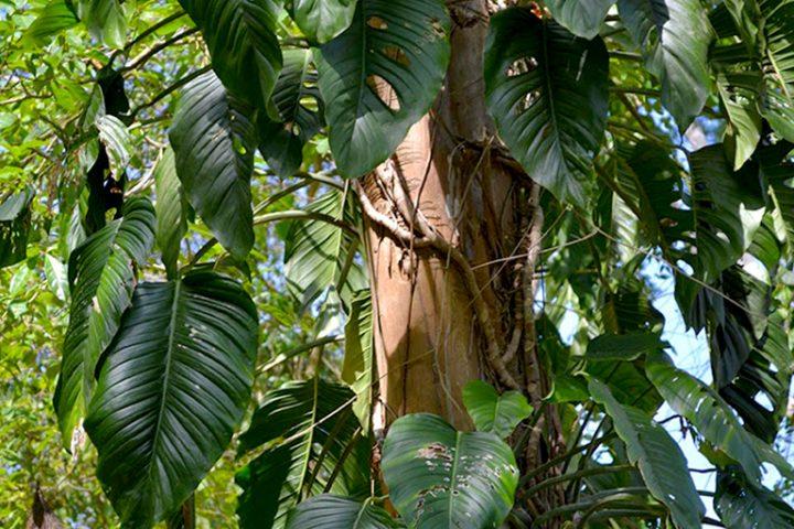 Vegetacion Nativa de hoja Ancha