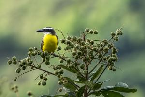 Avistamiento de aves Minca