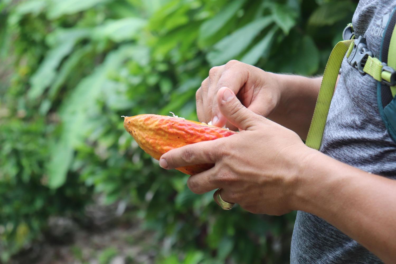 Cacao Tour - Buritaca Tubing